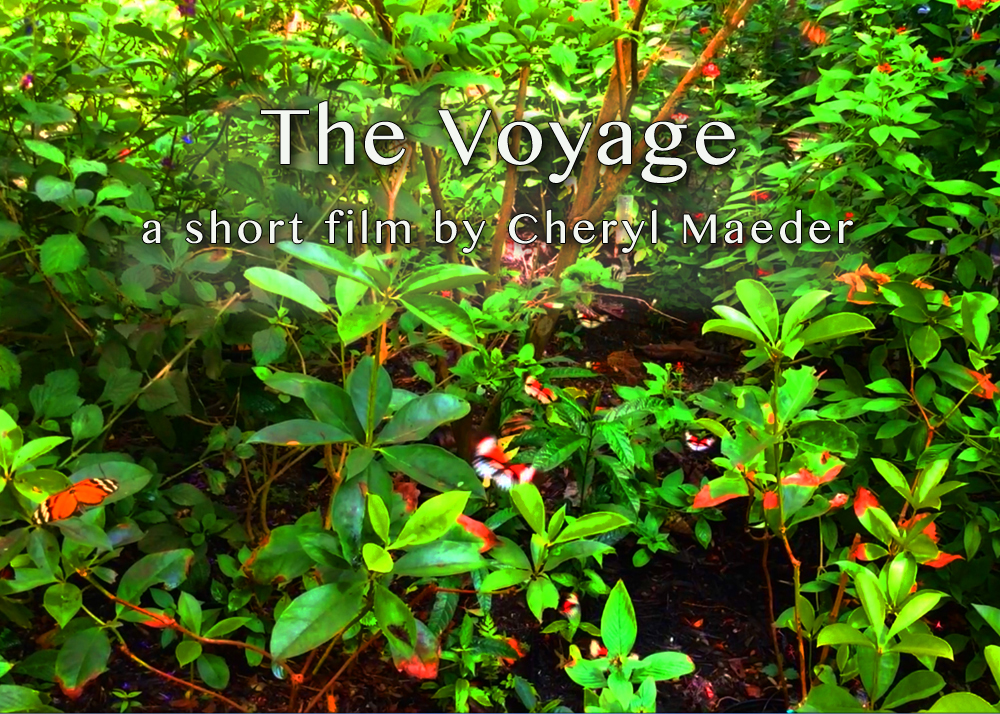 The Voyage Video Installation at Montefiore Medical Center