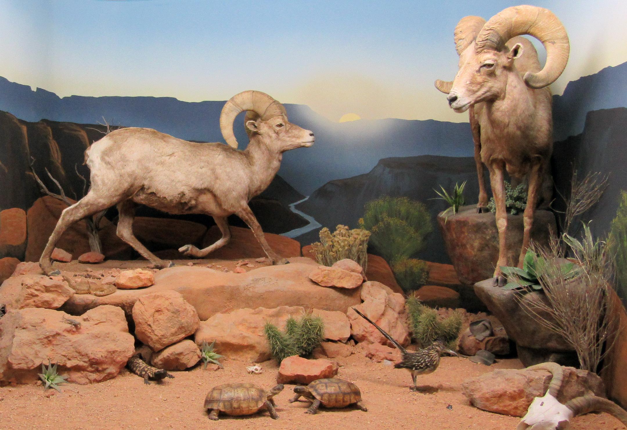 Bryce Wildlife Museum