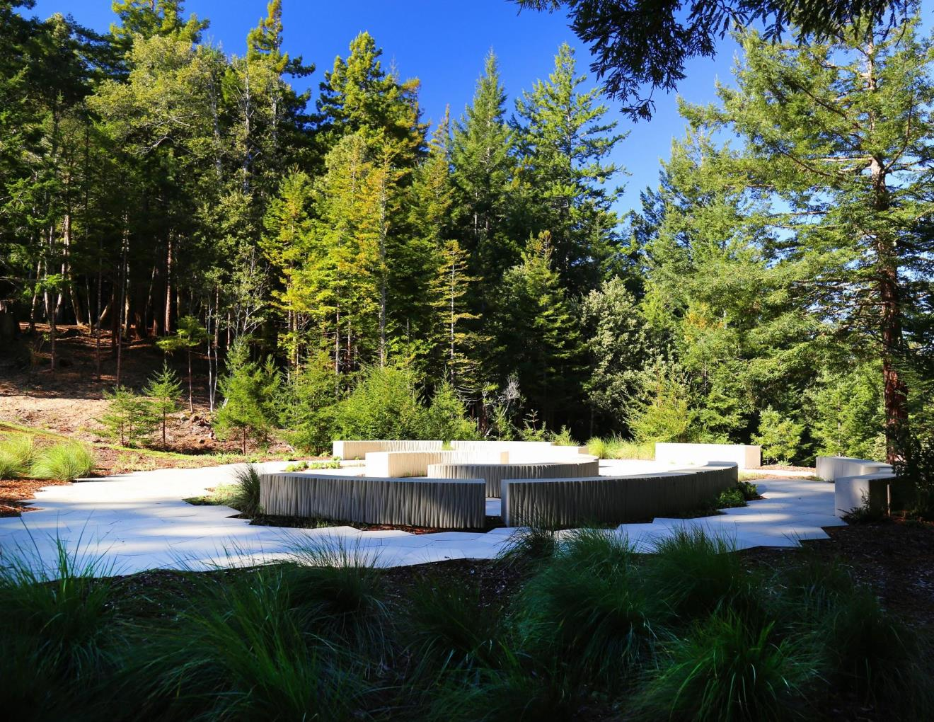 Better Place Forest – Point Arena