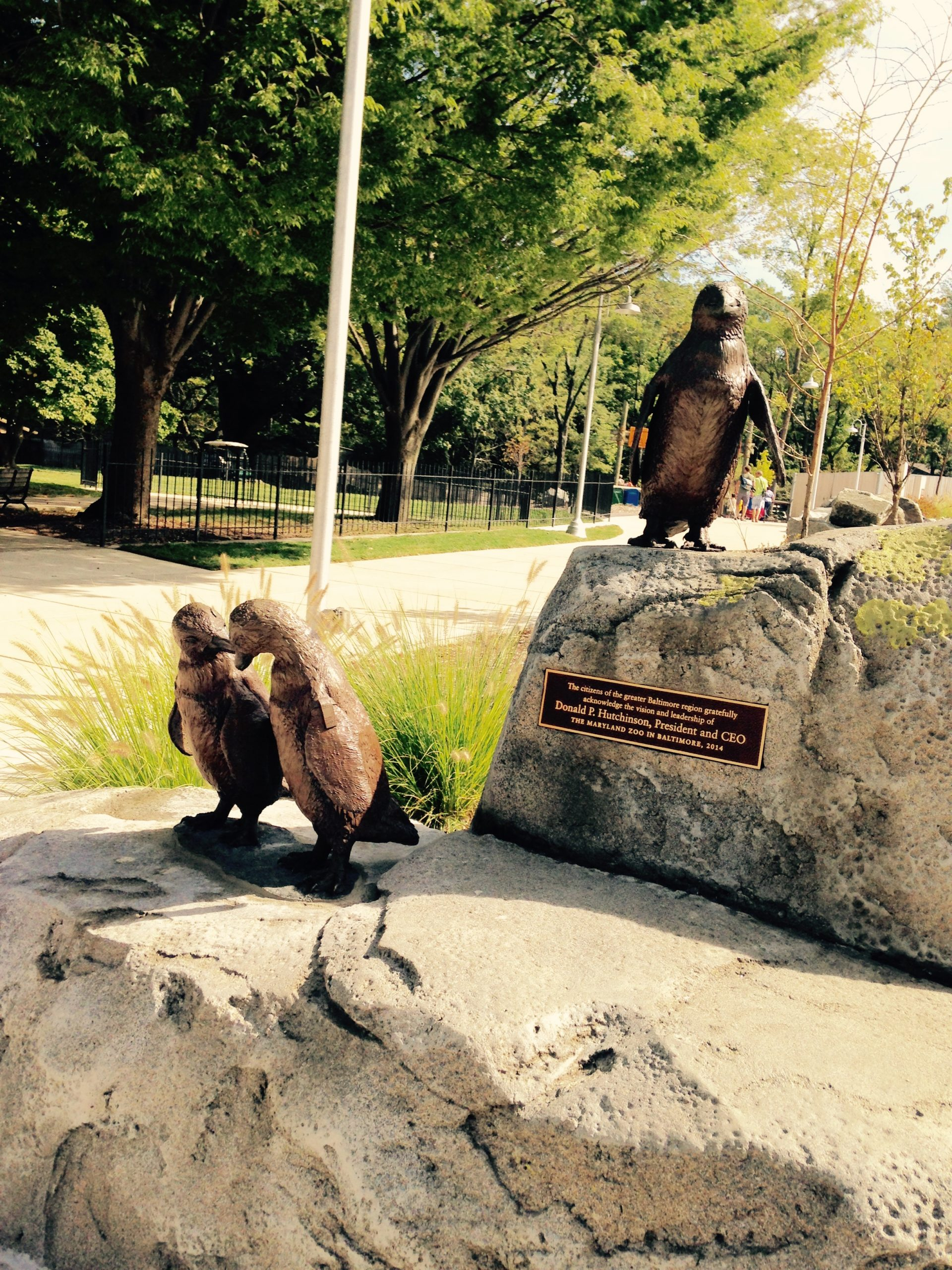 Baltimore Zoo Penguins