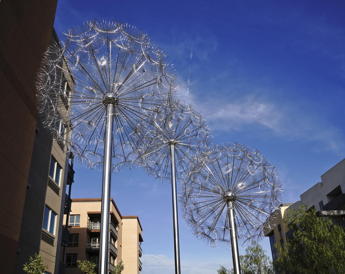 Dandelions San Mateo