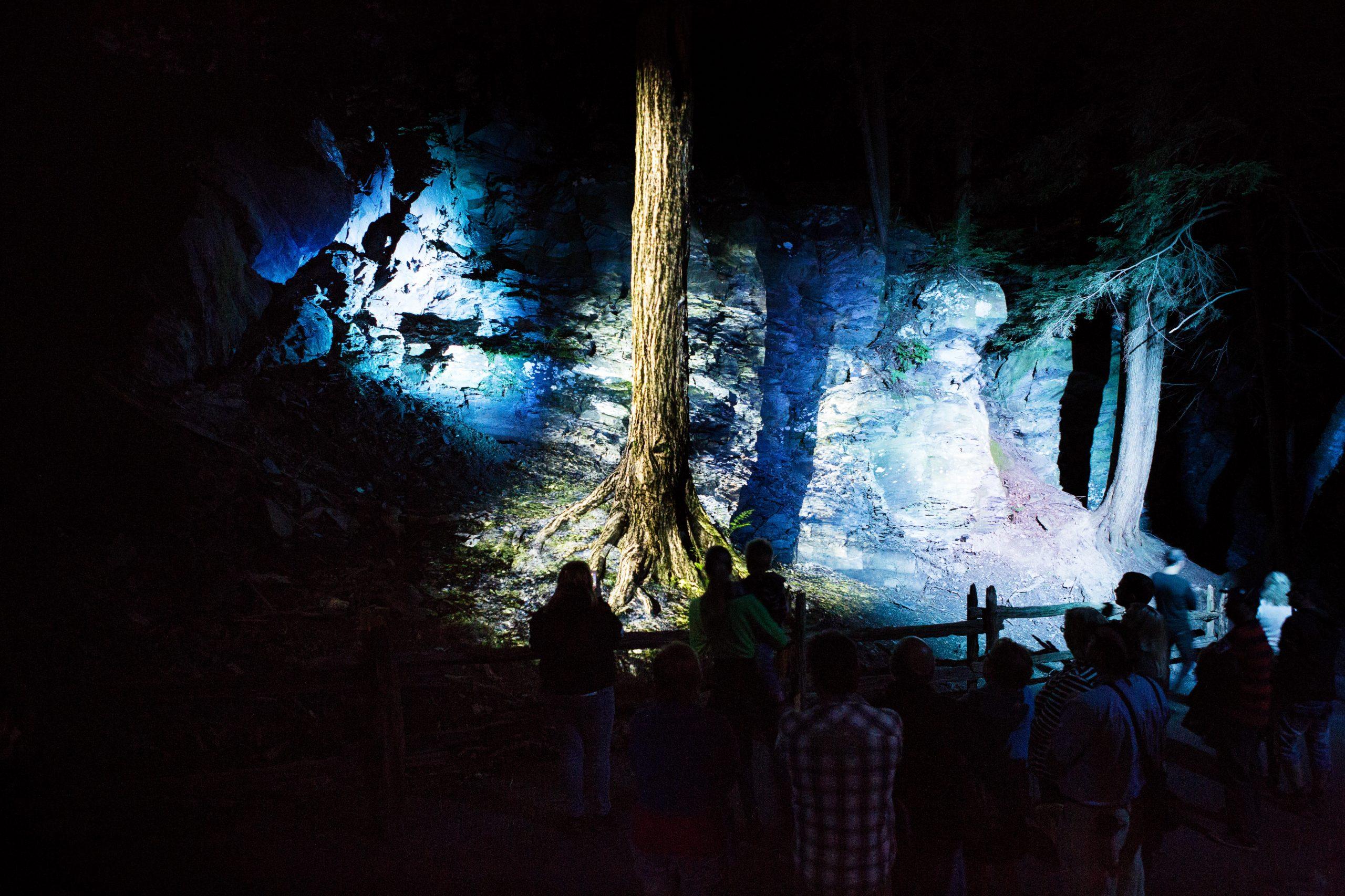 Foresta Lumina