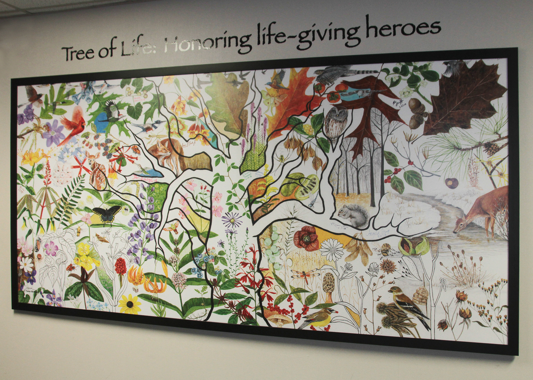 Organ Donor Recognition Wall